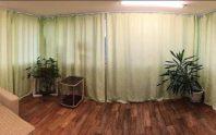 Комната с растениями